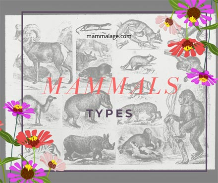 Types of Mammals in the Animal Kingdom