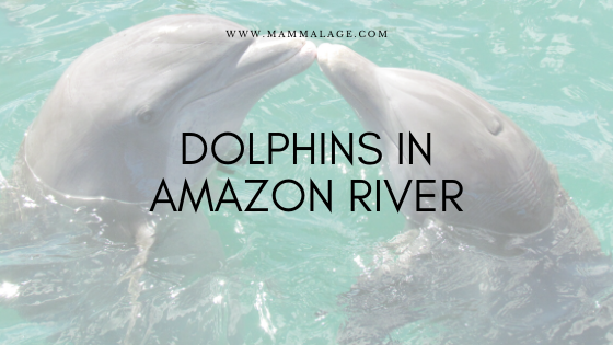 Dolphins in Amazon River – Temperament | Facts | Lifetime