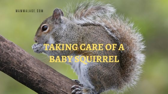 How to Take Care of a Baby Squirrel – A to Z Guide